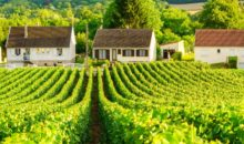 Potovanje boste pričeli v francoski pokrajini Šampanji, se odpravili do mesta Reims, kjer so Francozi kronali svoje kralje... Avtobus, 4-5 dni, 298 EUR.