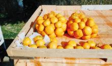 Vožnja po dolini Neretve, pokušina tipičnega neretvanskega brodeta in nepozabno doživetje ob obiranju mandarin,...3 dni, 175 EUR (vse všteto...)