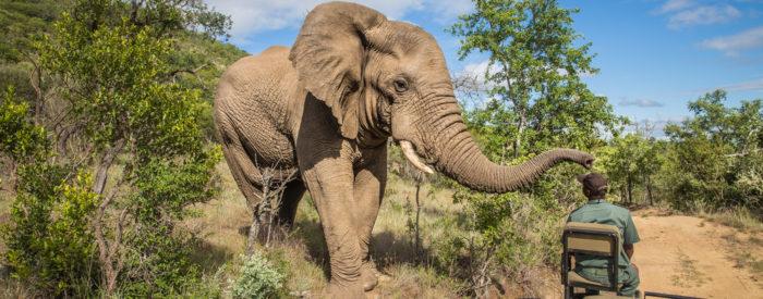 Neokrnjena narava, safari v nacionalnih parkih, vinogradi, Capetown, Durban, Johannesburg, čudoviti Viktorijini slapovi...15. dni.