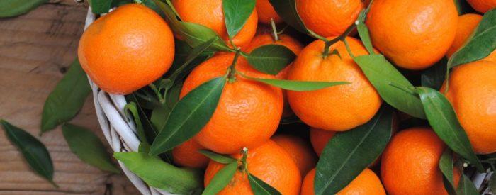 Vožnja po dolini Neretve in nepozabno doživetje ob obiranju mandarin, živahni večeri ob glasbi...